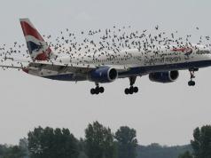 Что происходит с самолётами после попадания птиц в двигатель